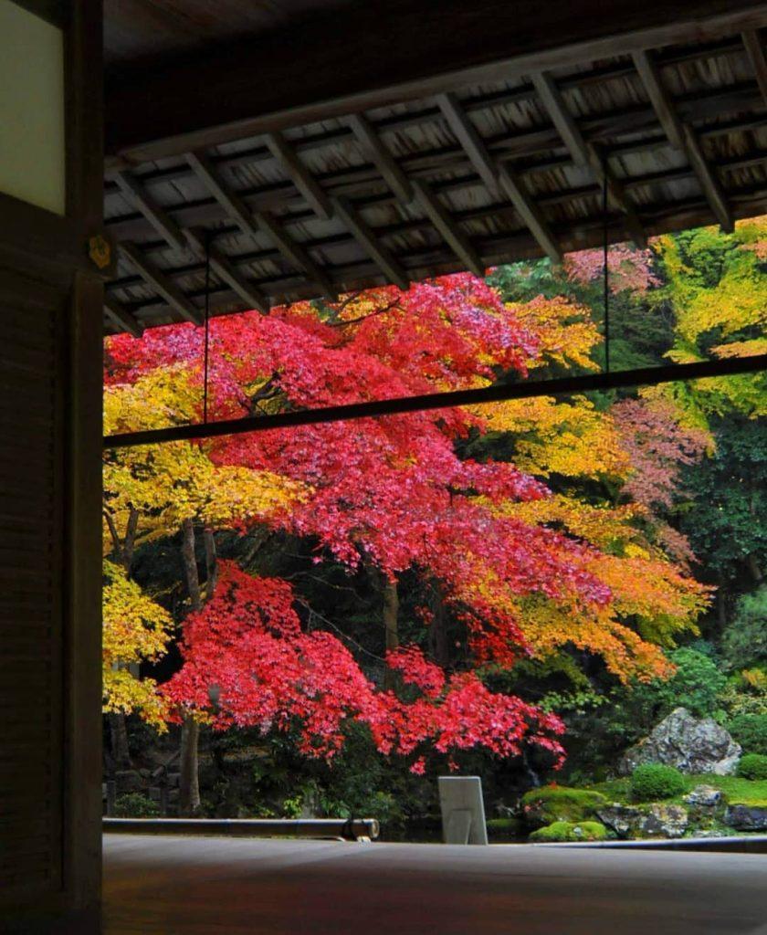 پاییز رنگارنگ ژاپن