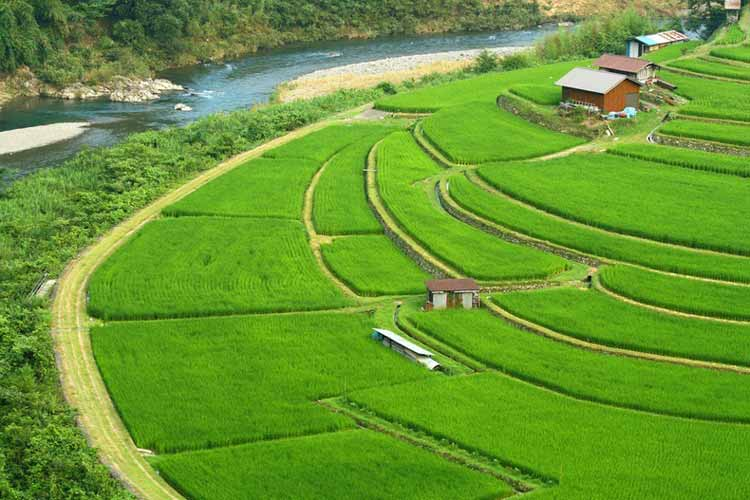 rice-terraces-5[2]