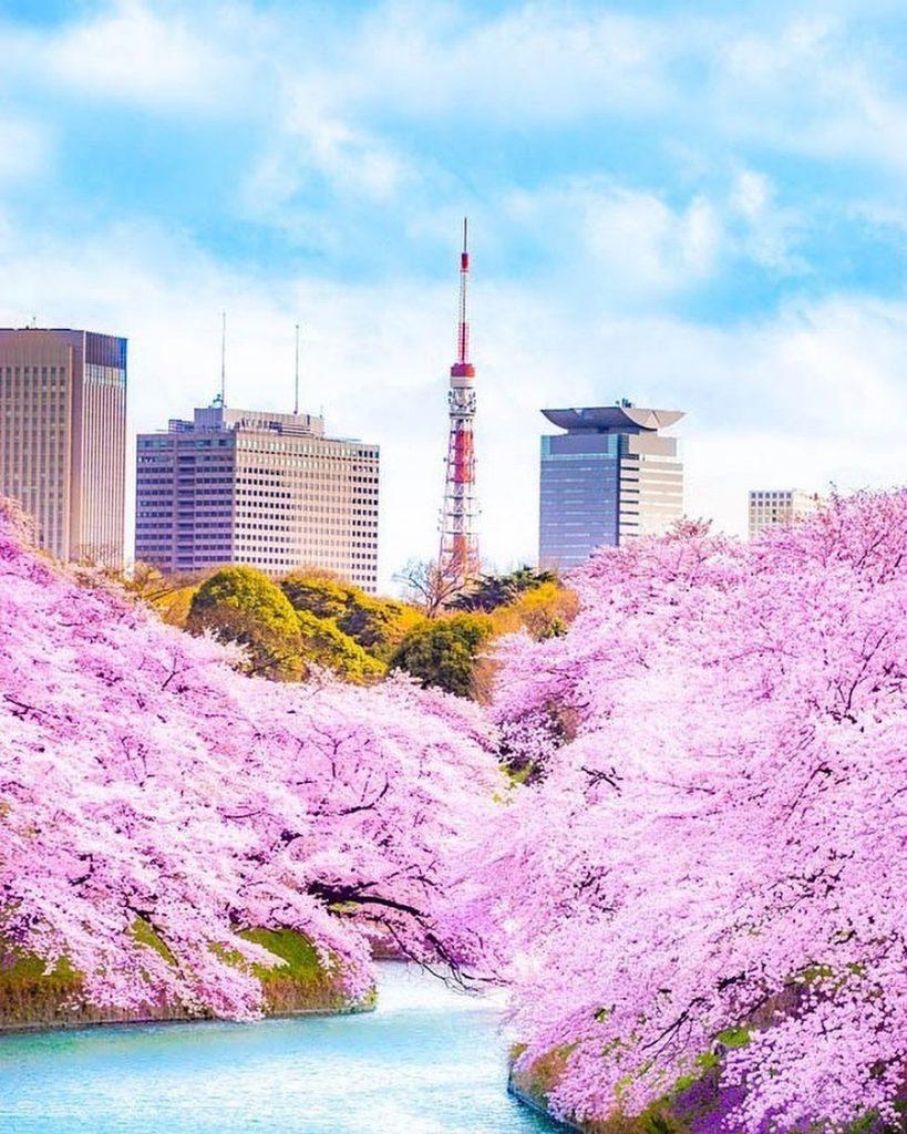 عکس بهار ژاپن